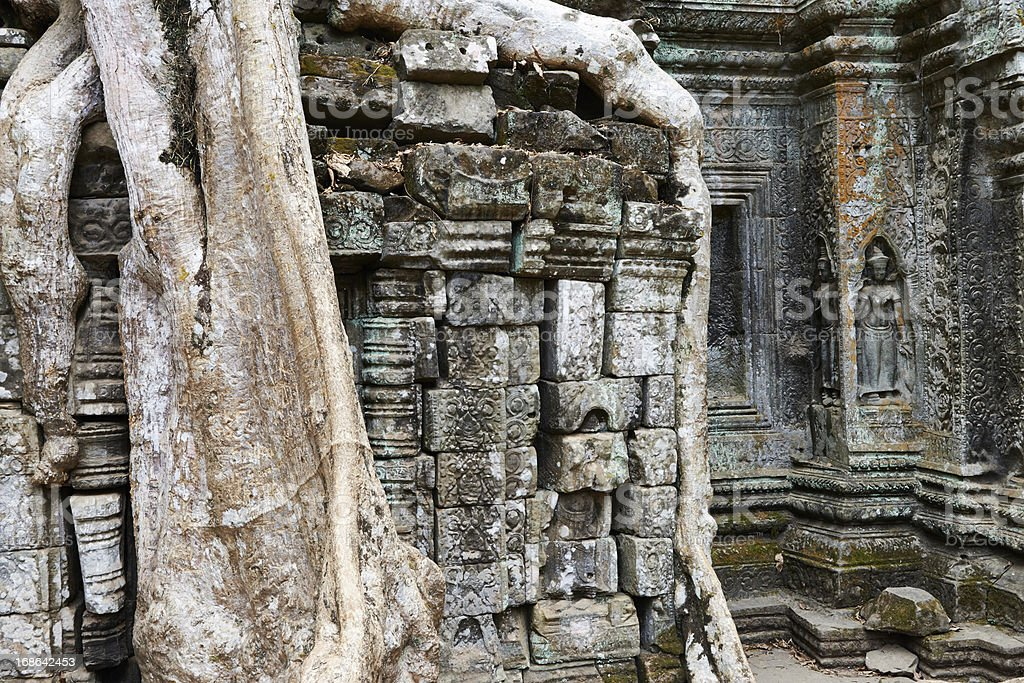 Overgrown Roots at Ta Prohm Temple royalty-free stock photo