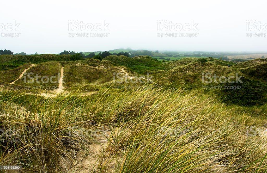 Overgrown Sandy Dunes at Brittas Bay in Ireland stock photo