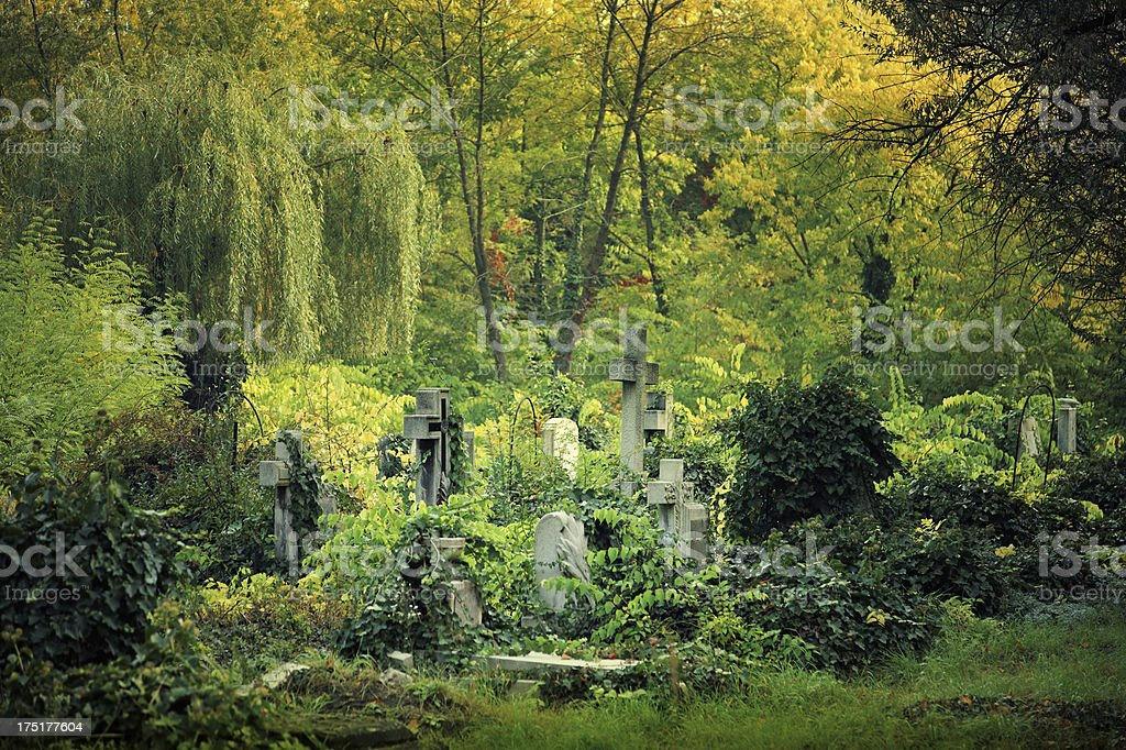 Overgrown tombstones in the cemetery royalty-free stock photo