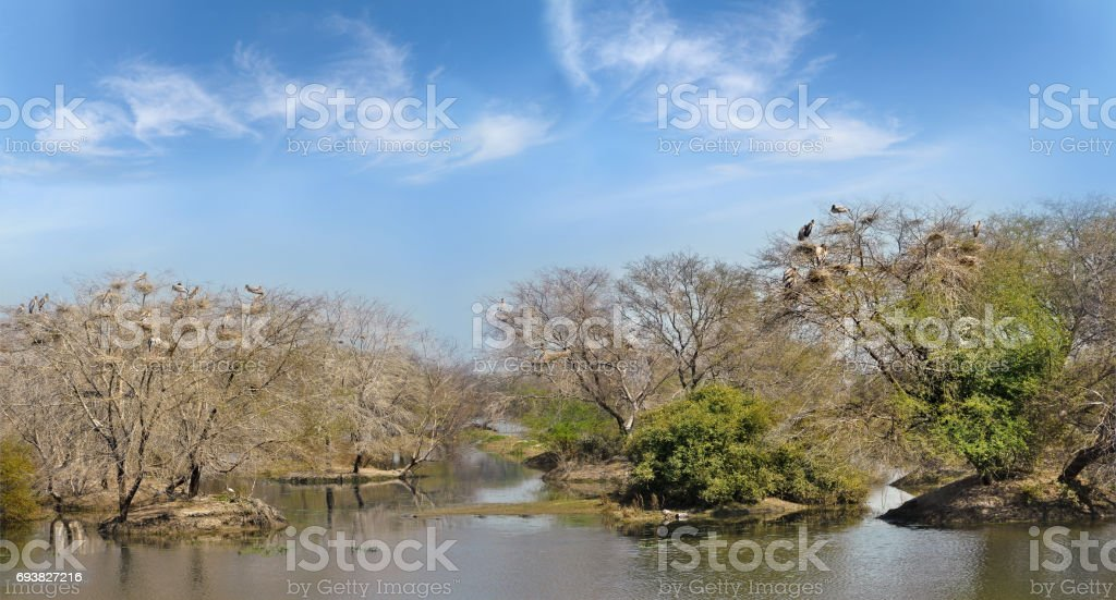 Overgrown trees in the ponds Keoladeo National park stock photo