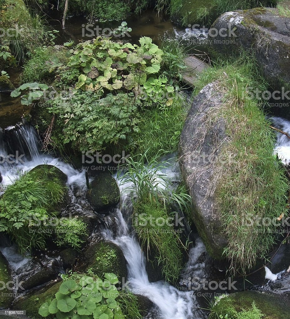 overgrown Triberg Waterfalls detail royalty-free stock photo