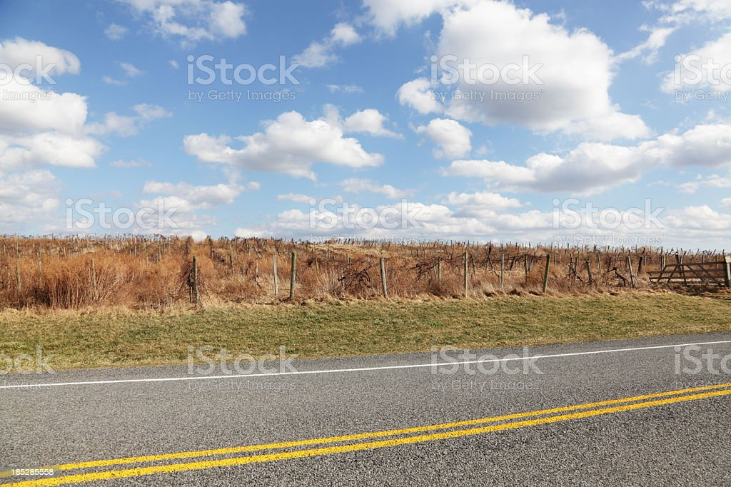 Overgrown Vineyard in Early Spring royalty-free stock photo