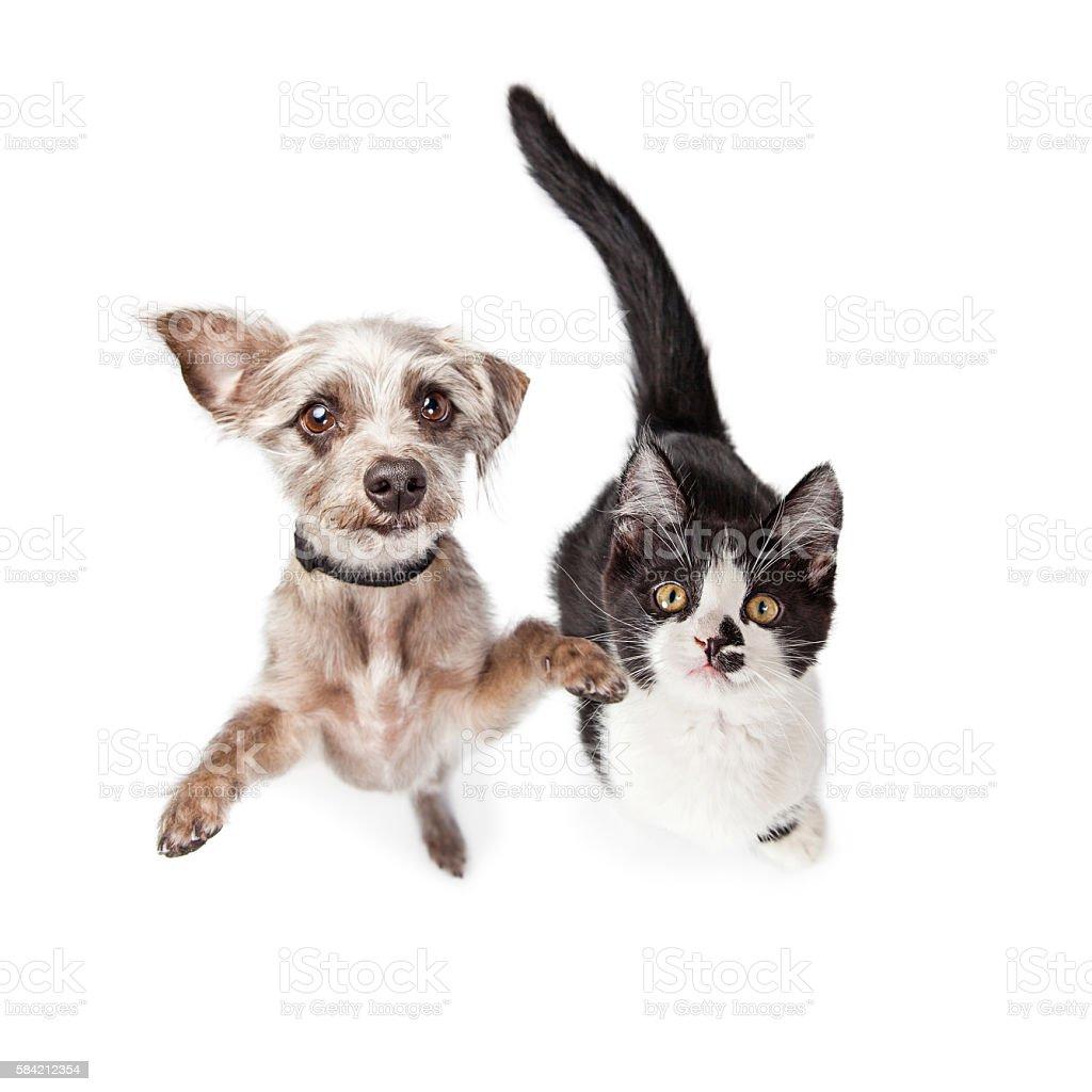 Overhead Photo Cute Kitten and Dog stock photo