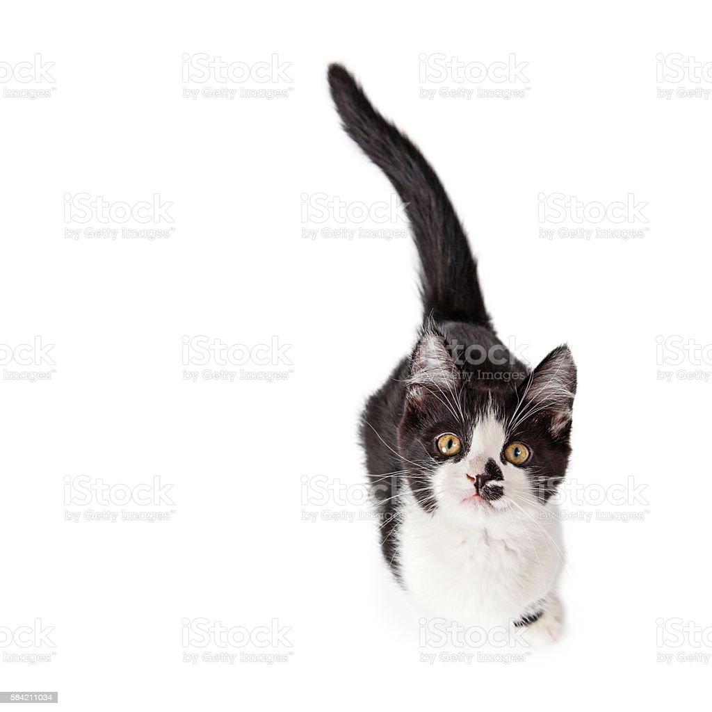 Overhead Photo Of Cute Kitten stock photo