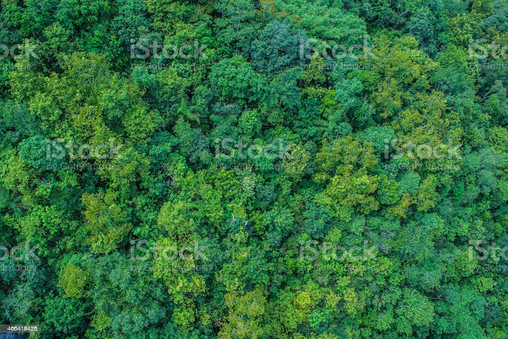 Overhead shot of lots of trees stock photo