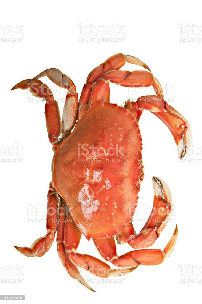 Overhead View Of Cooked Dungeness Crab stock photo