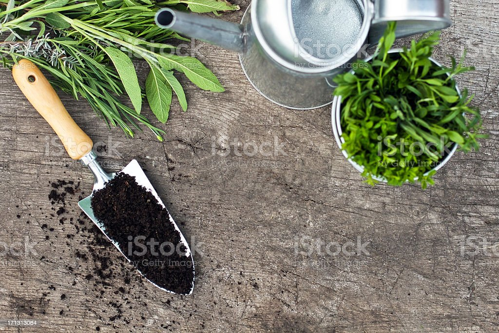 Overhead view of gardening tools and herbs stock photo