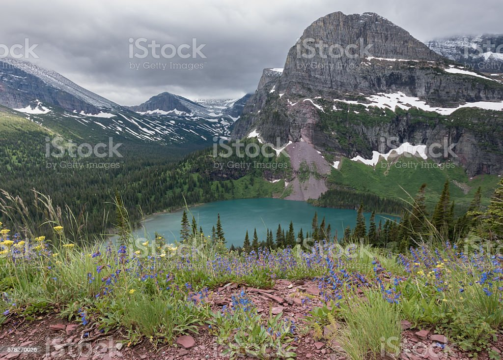Overlooking Wildflowers and Grinnell Lake stock photo