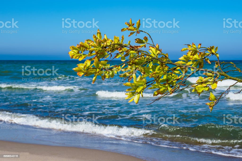 Overthrown tree on shore of the Baltic Sea stock photo