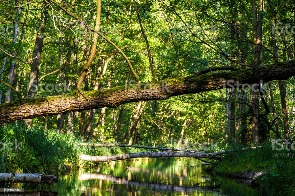 overthrown trees on a creek stock photo