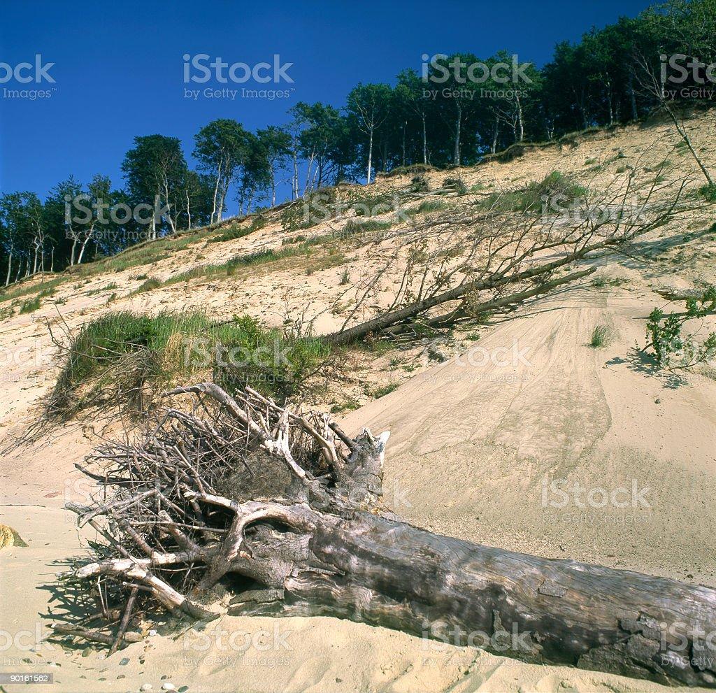 Overthrown trees royalty-free stock photo