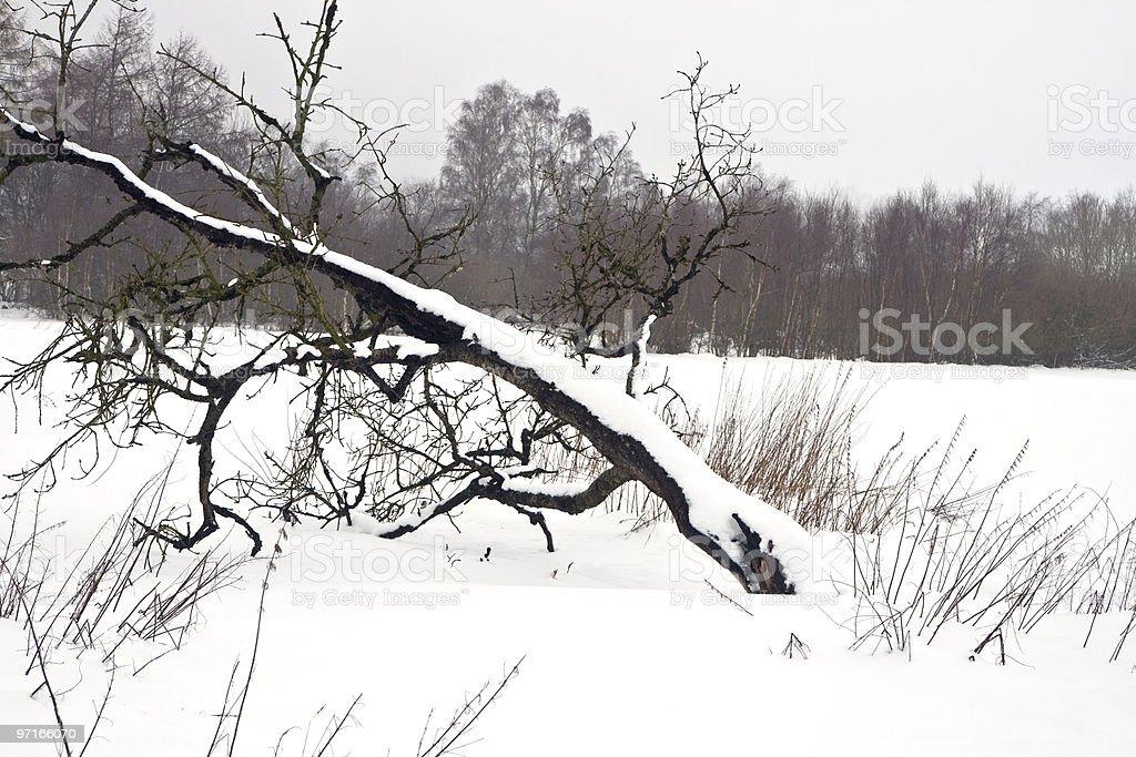 Overturned Tree stock photo
