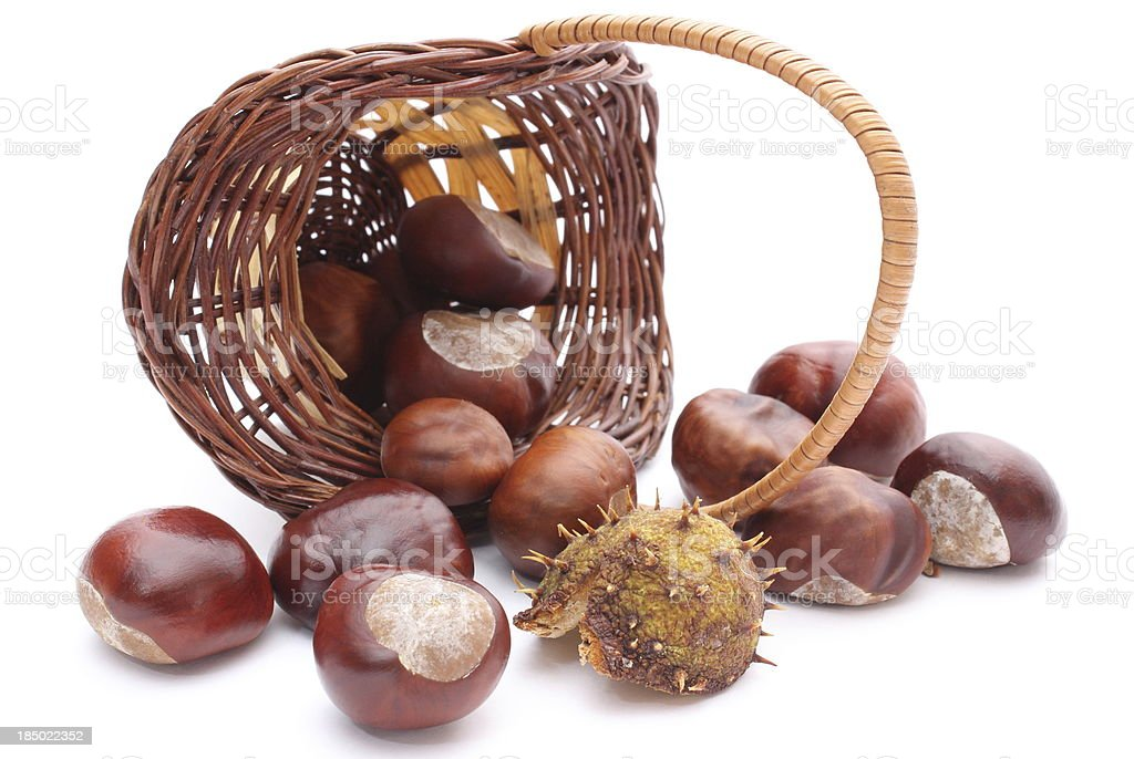 Overturned wicker basket with chestnuts on white background royalty-free stock photo