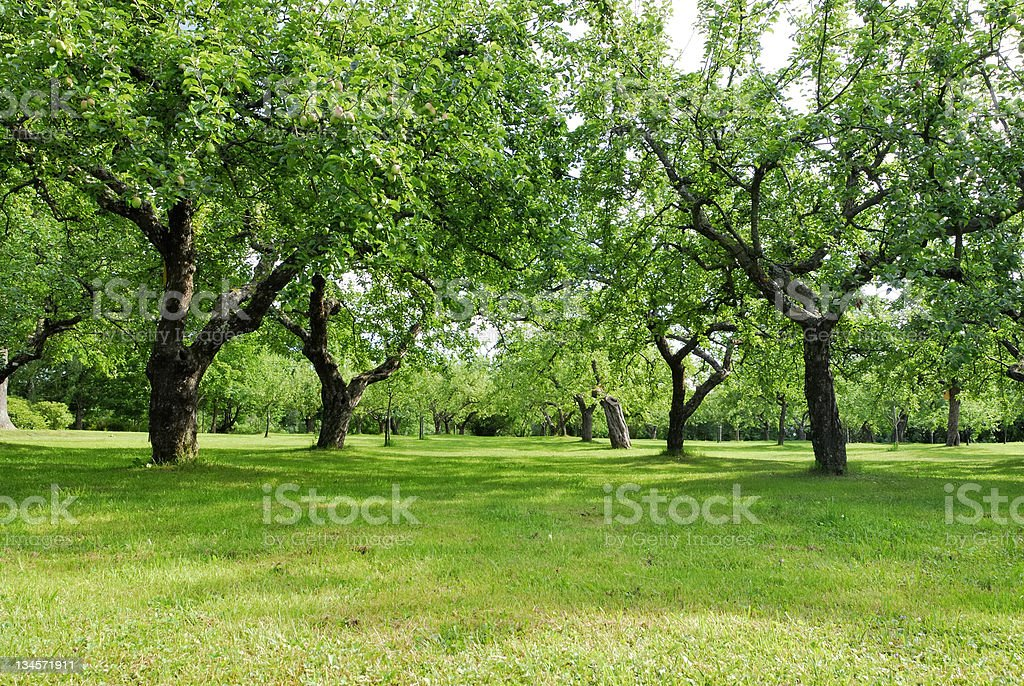 Overview of vivid green fruit orchard royalty-free stock photo