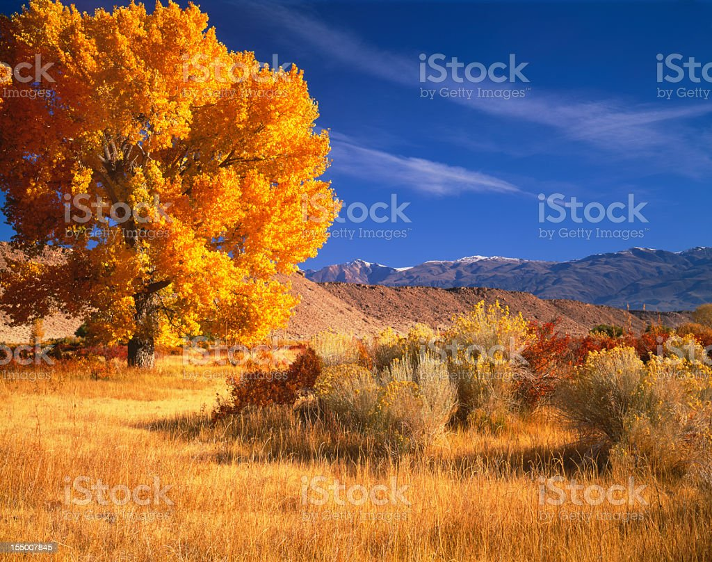 Owen's  Valley's Awesome Autumn (Pg) royalty-free stock photo