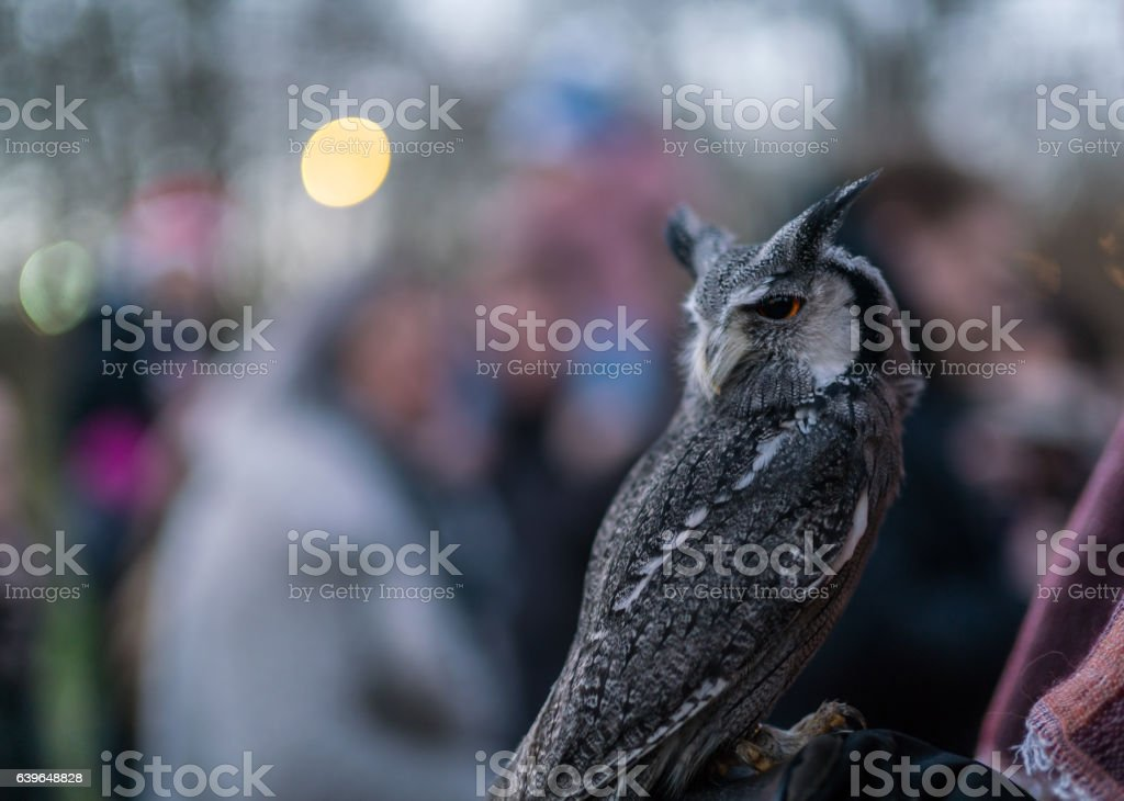 Owl at the Christmas Fair by the Lake Konstanz Germany stock photo