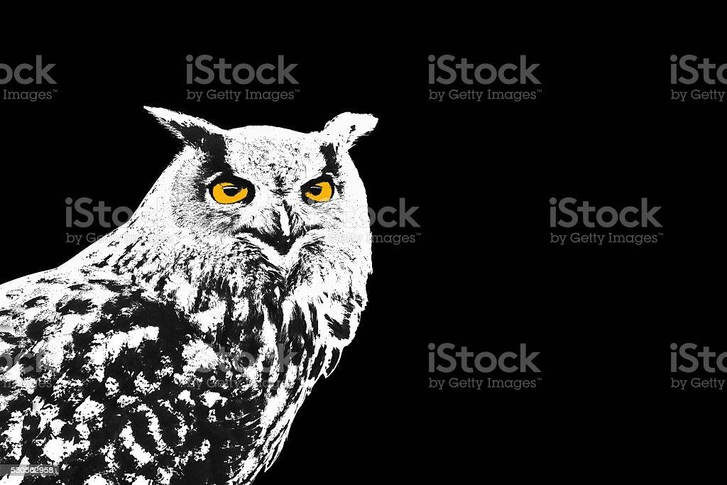 Owl, Bubo Bubo stock photo