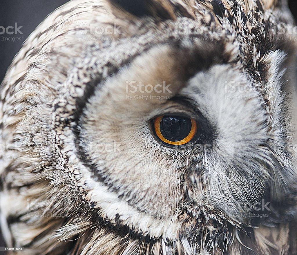 Owl eye close up royalty-free stock photo