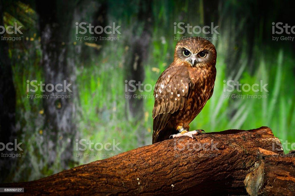 Owl -  Hunter at Night stock photo