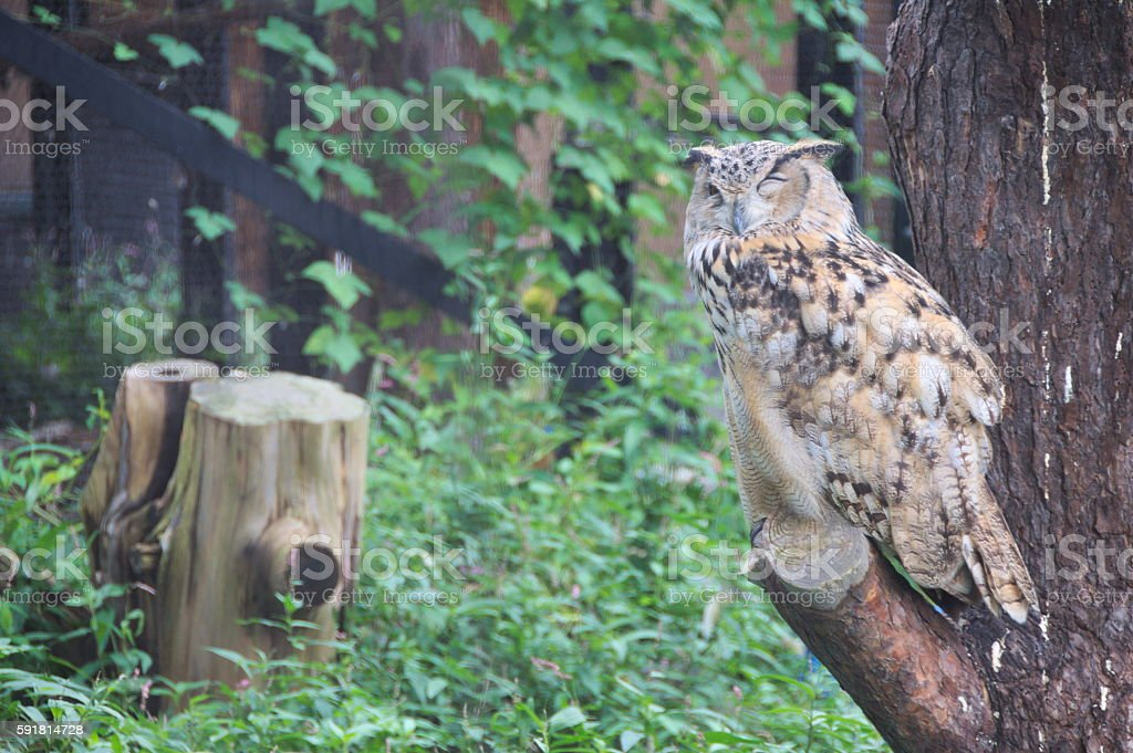 Owl in a tree, wildlife shot stock photo