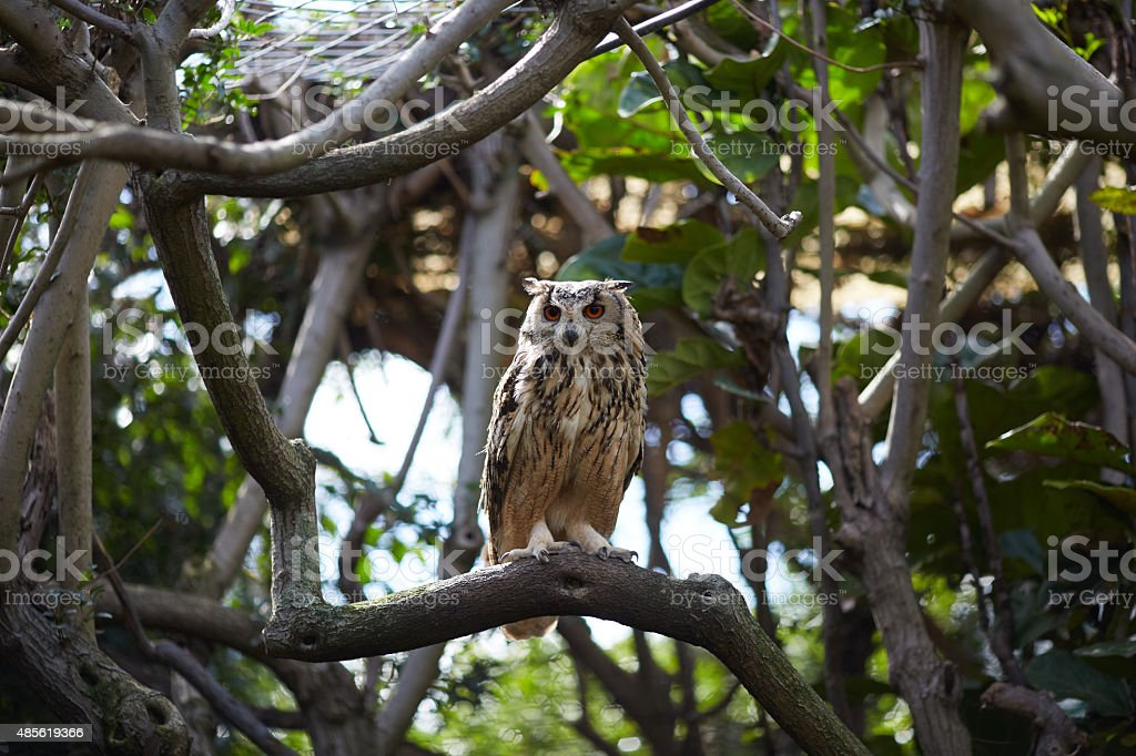 owl in the zoo of South Africa stock photo