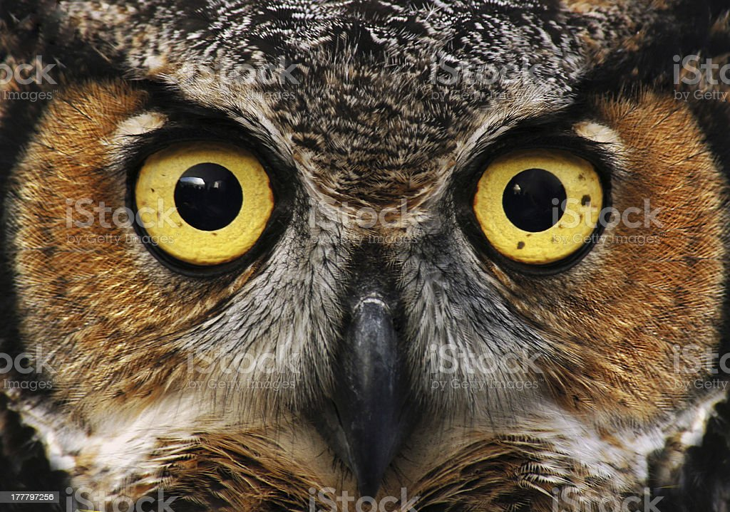 Owl look stock photo