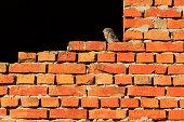 owl on a brick wall