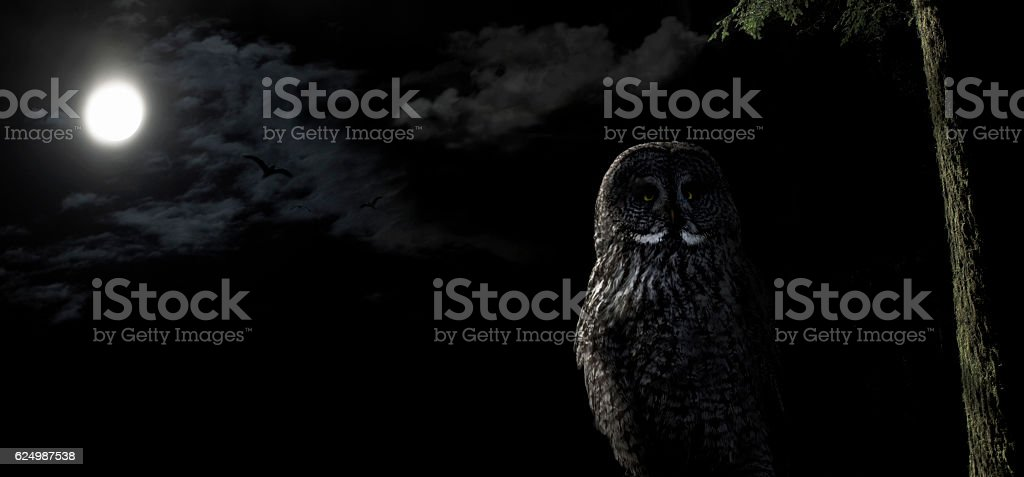 Owl perched in tree at night under a full moon stock photo