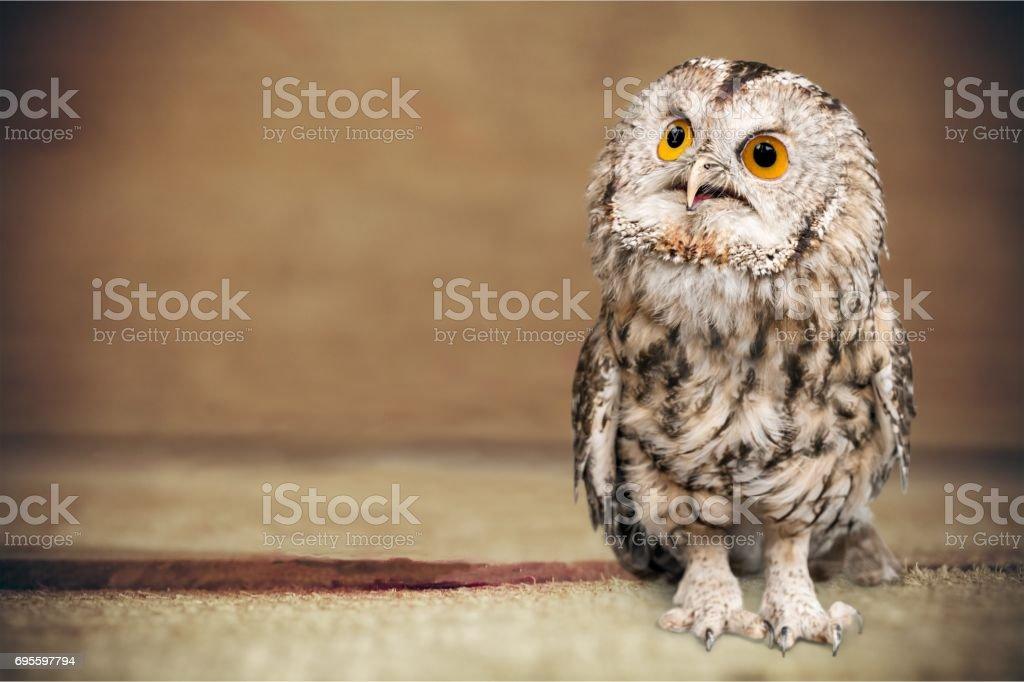 Owl. stock photo