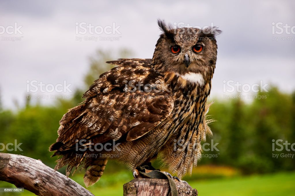 owl sits on tree stock photo