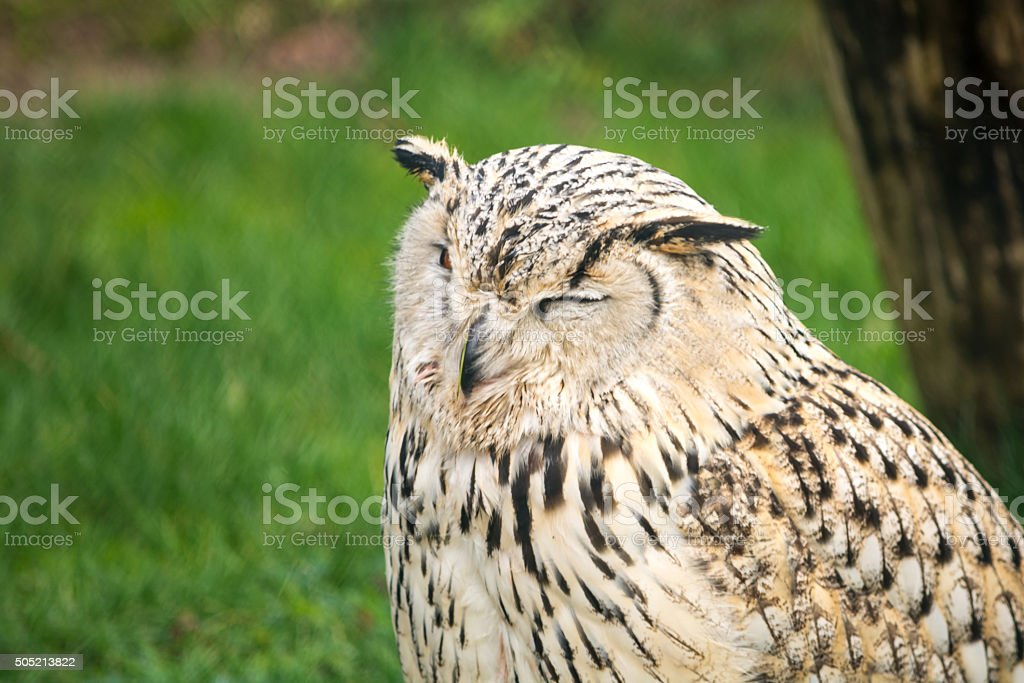 Owl sitting in front of a meadow stock photo