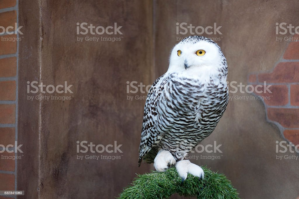 Owl stands on grass arch stock photo
