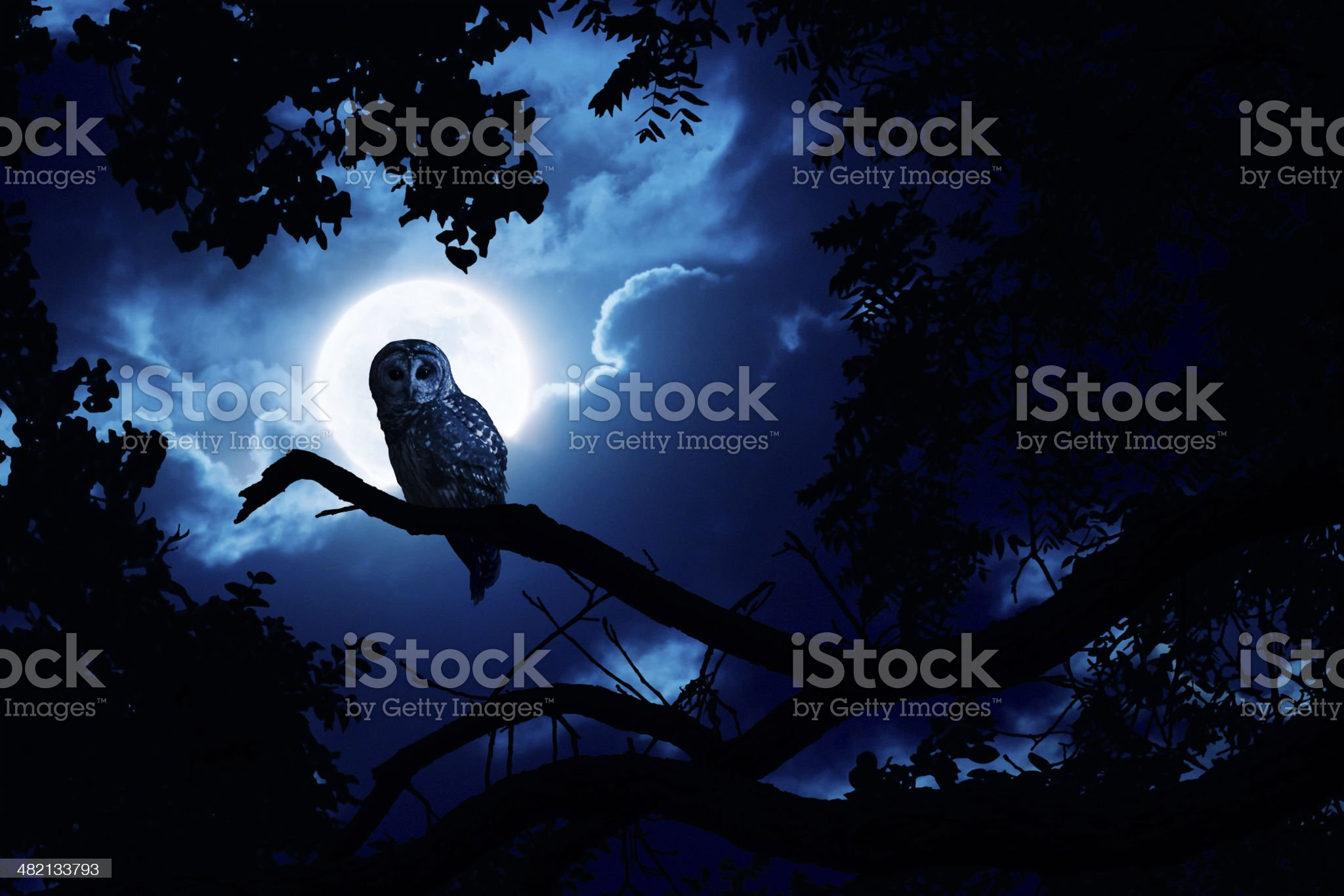 Owl Watches Intently Illuminated By Full Moon royalty-free stock photo