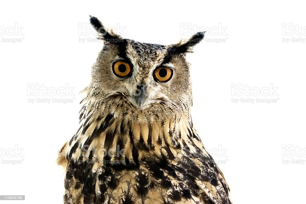 Owl watching in camera stock photo