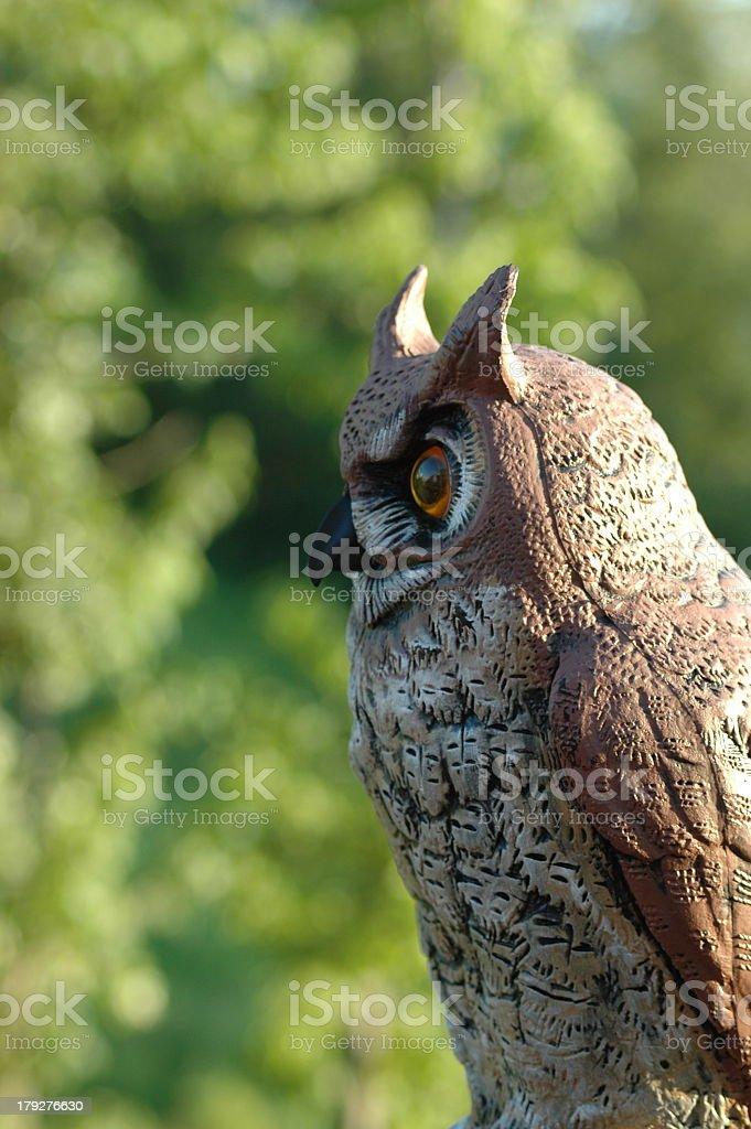 Owl.JPG stock photo