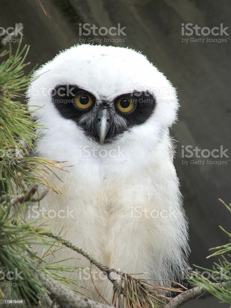 Owls About That stock photo