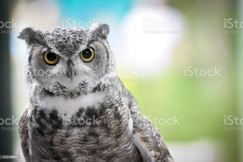 Owls Head stock photo
