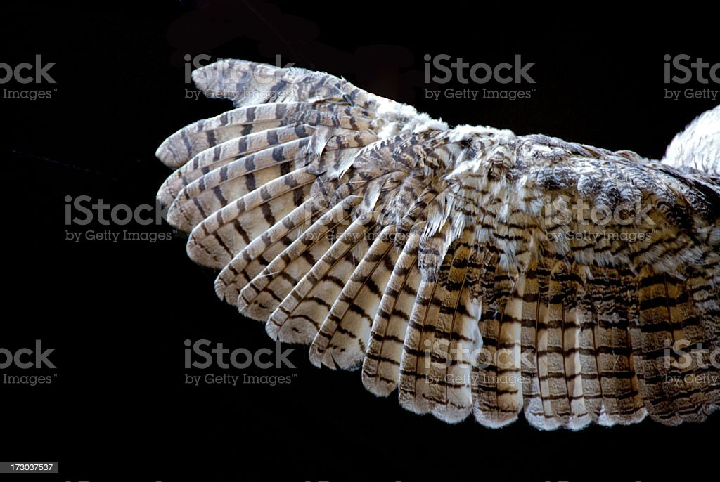 Owl's Wing... Close-up royalty-free stock photo