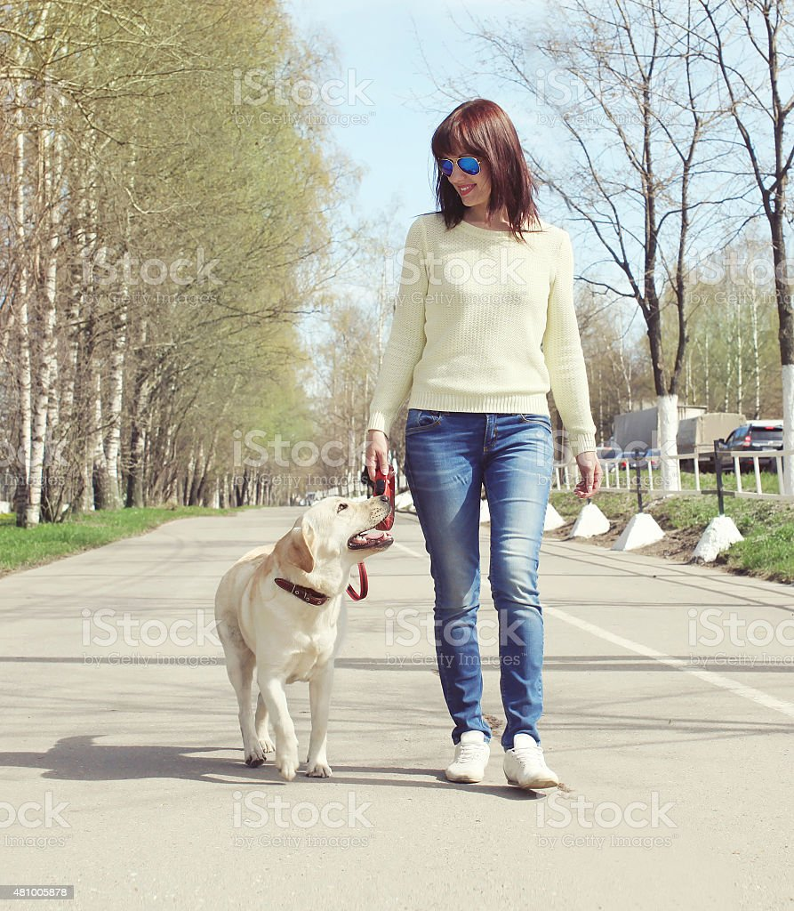 Owner and labrador retriever dog outdoors walking in the city stock photo