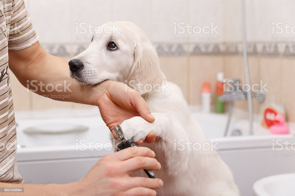 owner grooming his dog at home stock photo