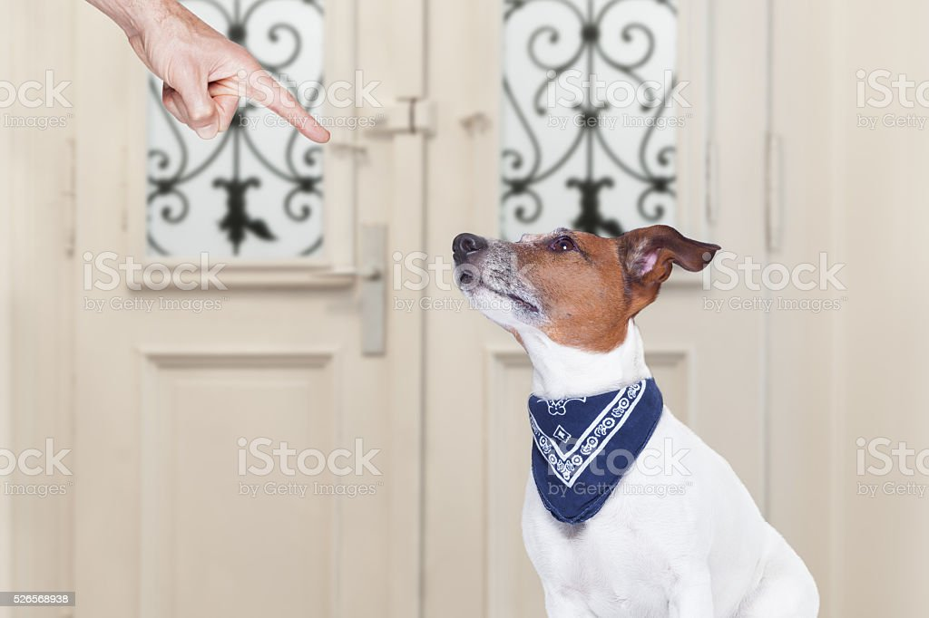 owner punishing his dog stock photo