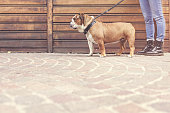 owner with her bulldog walking in a urban city