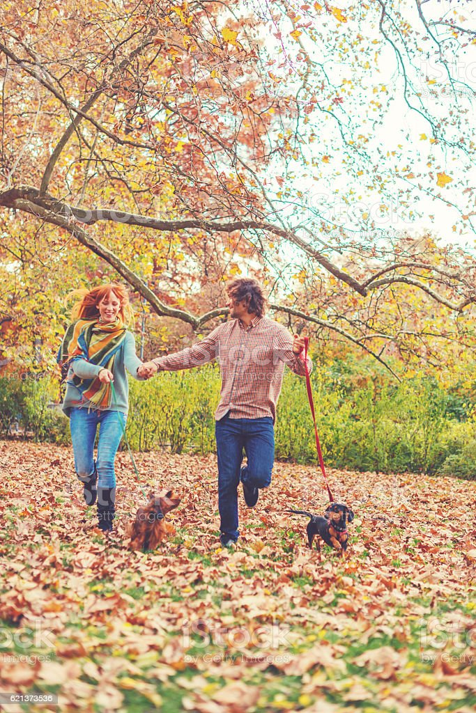 Owners running their dogs in park on autumn day stock photo