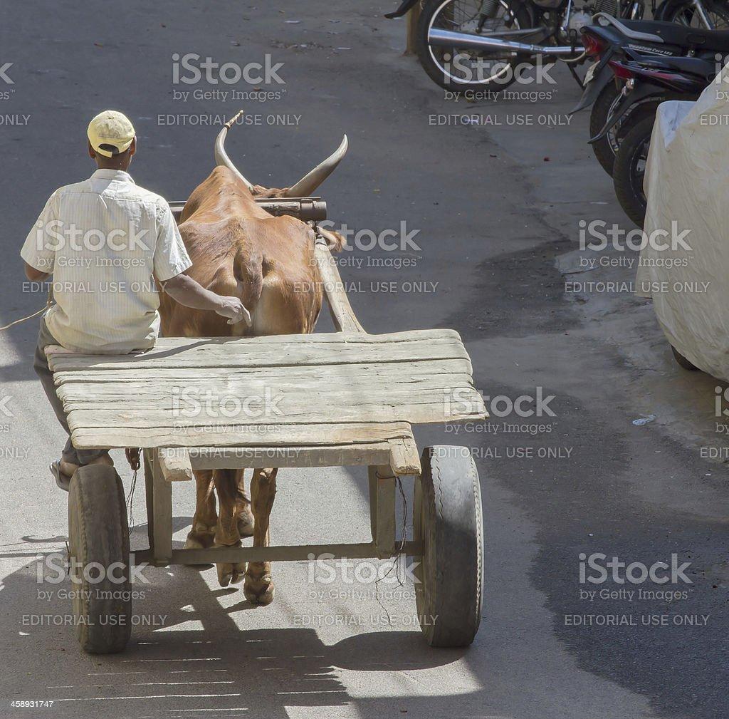 Ox cart, India royalty-free stock photo