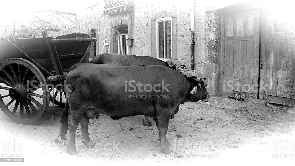 Oxen Bullock Cart - Carro de Vacas stock photo