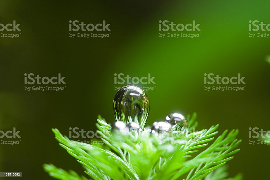 Oxygen Bubble From Aquatic Plant stock photo