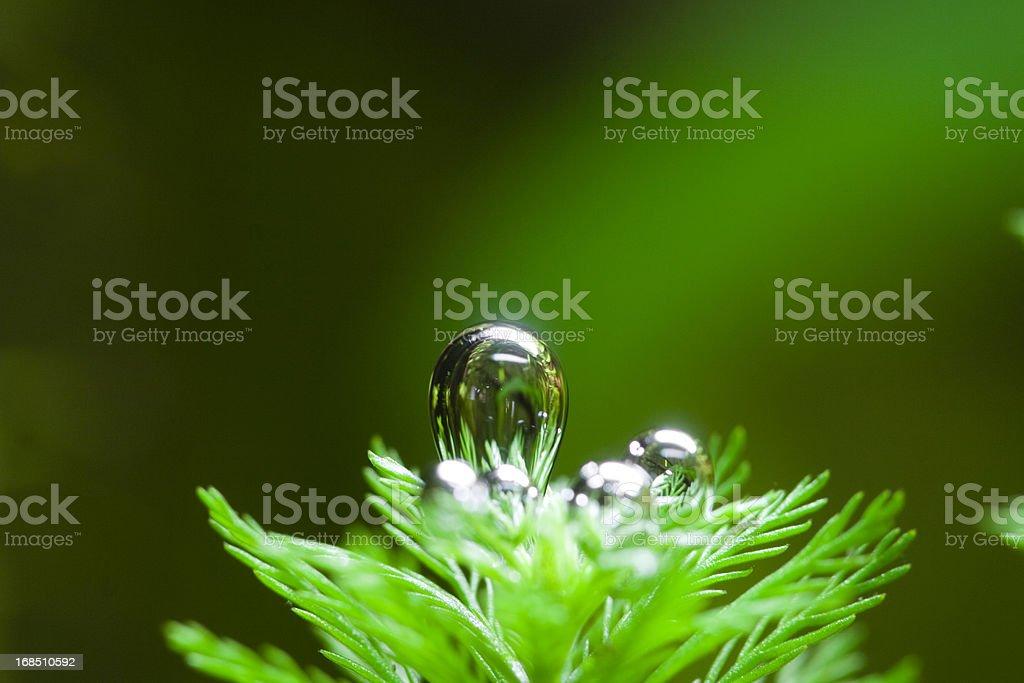 Oxygen Bubble From Aquatic Plant stock photo