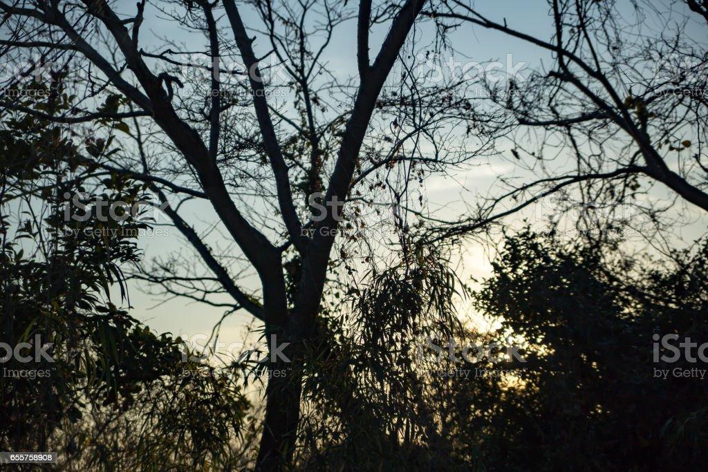 湘南平から眺める大山 stock photo