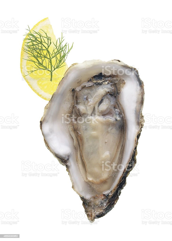 Oyster and Lemon stock photo