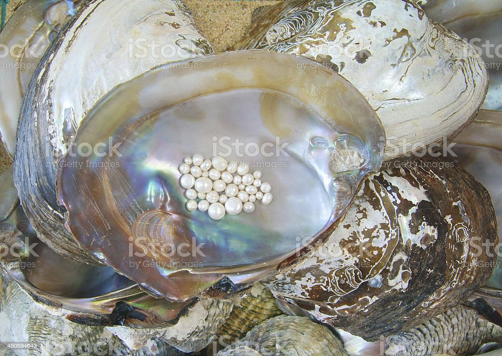 oyster and pearl royalty-free stock photo